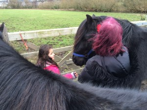 Even little Fell ponies are quite big!
