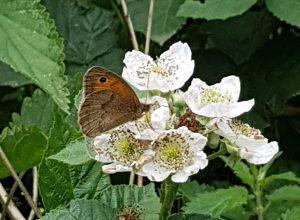 butterfly 10 06 20 crop
